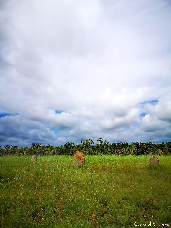 Termiteros en Litchfield