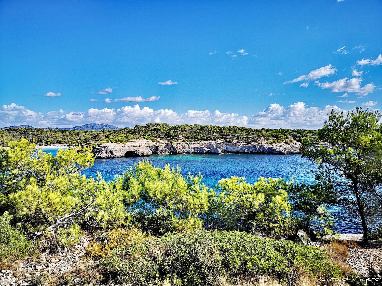 Mondragó en Mallorca