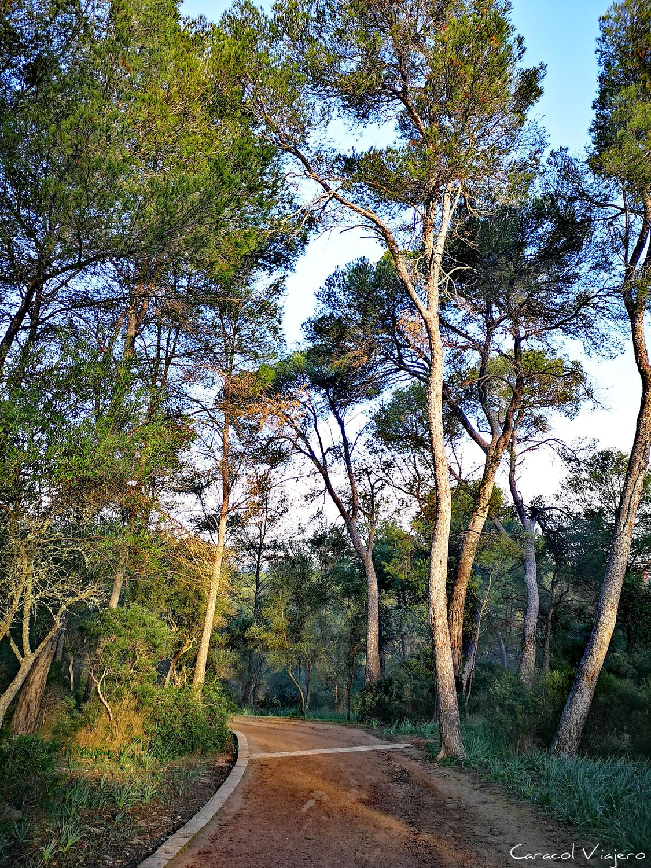 Bosque de Bellver