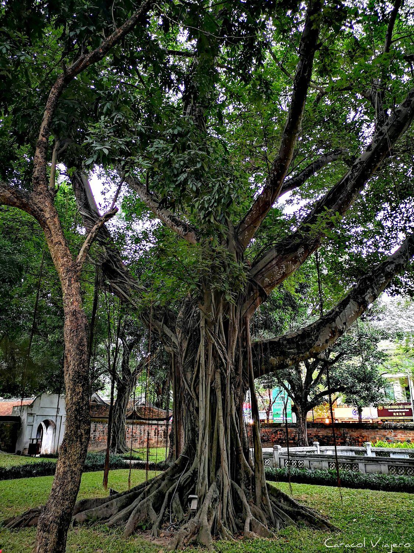 árboles templo de la Literatura