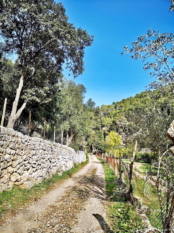 Camino de Coanegra