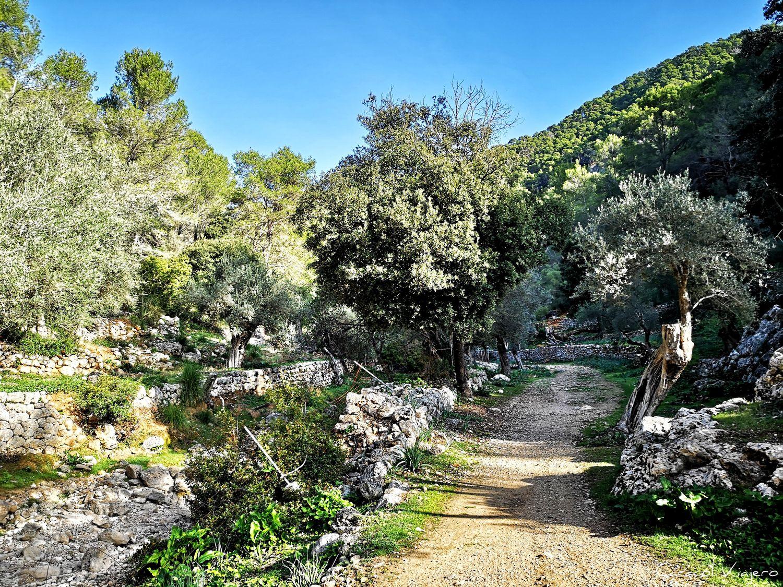 Mallorca en bici   Rutas cicloturistas en Mallorca