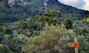 Senderismo en Mallorca   Rutas por la serra de Tramuntana